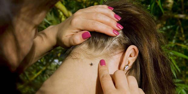 Как защититься от клещевого энцефалита