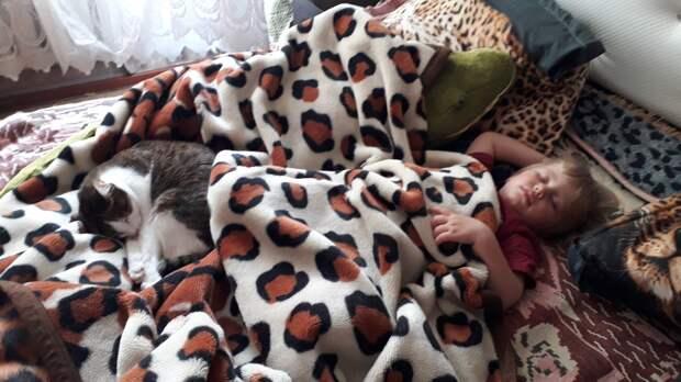 Хозяин грозился усыпить свою кошку, если ее никто не заберет. К счастью, кому-то она оказалась очень нужна