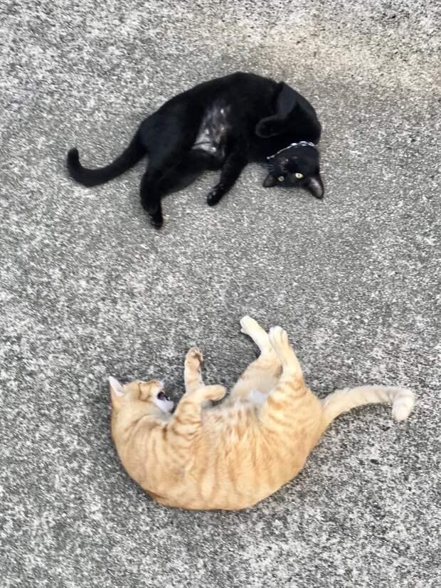 Друзей по несчастью назвали Госаку и Кен-чан животные, кот, кошки, милота, музей, япония