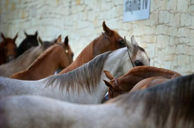 В Якутске откроют «штрафстоянки» для безнадзорных лошадей