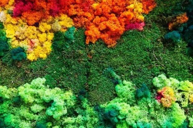цветной лишайник