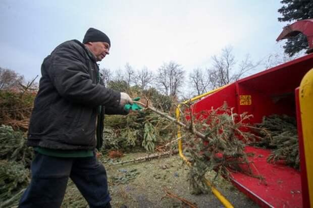 Четыре пункта приёма отслуживших ёлок будут работать до 20 февраля в Алтуфьеве