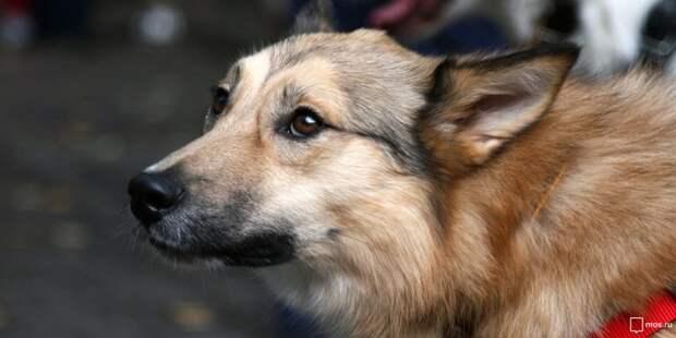 Арт-кофейня на Песчаной организует поездку в приют для животных