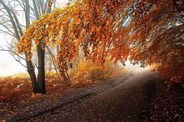 Сюрреалистический осенний лес вфотографиях Янека Седлара