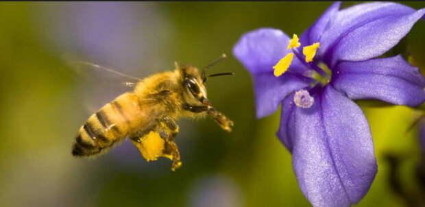 Настойка пчелиного подмора - эликсир от 100 болезней, даже онко