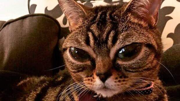 Внеземные существа: топ-5 пород кошек с инопланетной внешностью