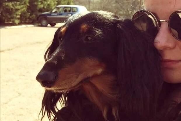 Степа вернулся к хозяевам Фото: предоставлено хозяевами собаки