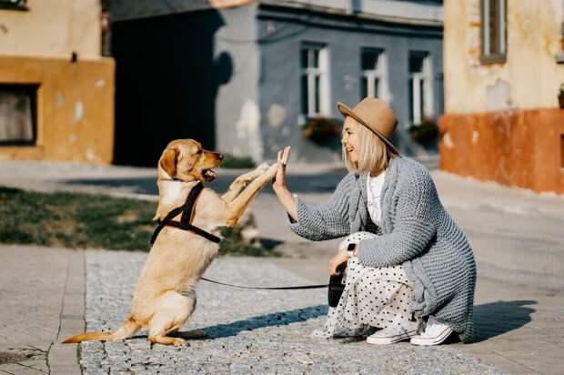 7 веских причин завести дома собаку