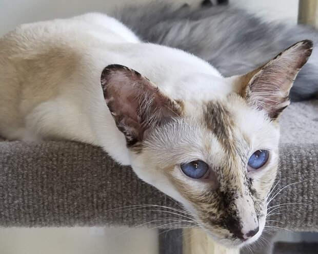Породы кошек 31