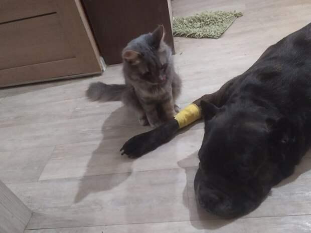 Коты заботятся о больной собаке и это очень мило