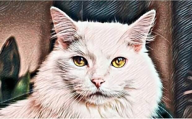 Кот трижды спас мою жизнь. Реальная история .