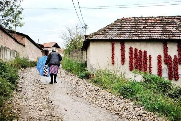 Деревня Donja Lakosnica - сербская «столица паприки» деревня, паприка, сербия