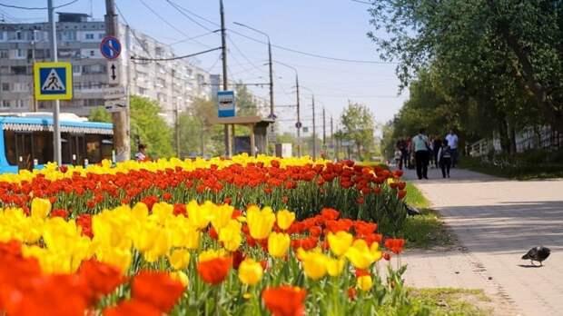 Тула стала тюльпановой столицей страны