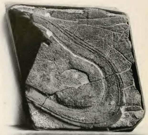 Подошве башмака из Невады полмиллиарда лет?