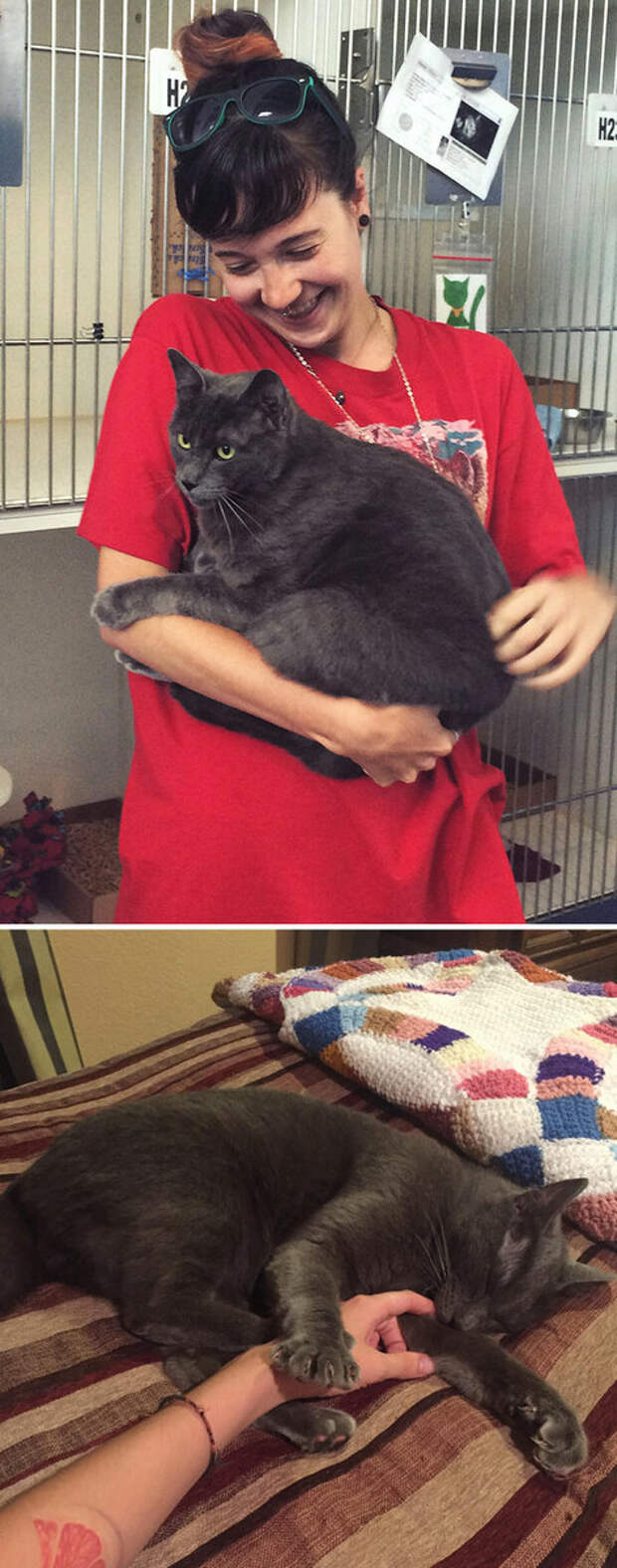 Радости кошки и хозяйки нет предела
