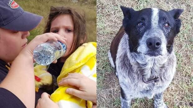 Старый и слепой песик охранял целых 17 часов пропавшую девочку