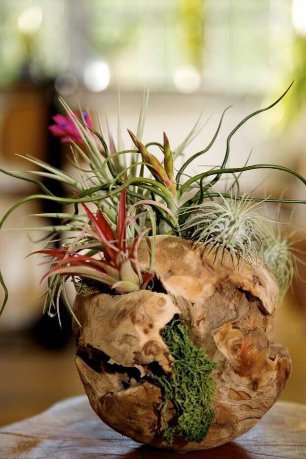 необыкновенные комнатные растения