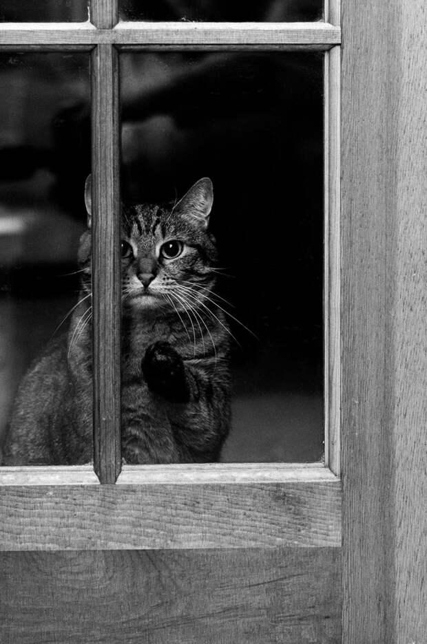 throughwindow10 Нечеловеческое любопытство: что видят в окнах животные