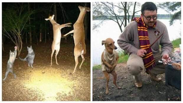 14 странных фото животных, которые сложно объяснить