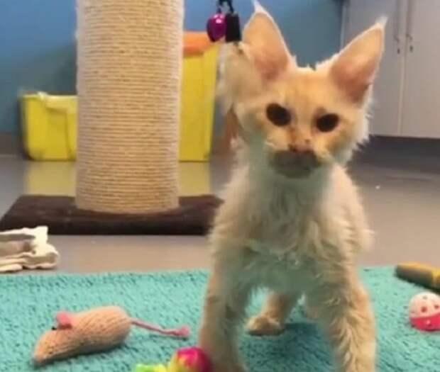 Котенок стоит