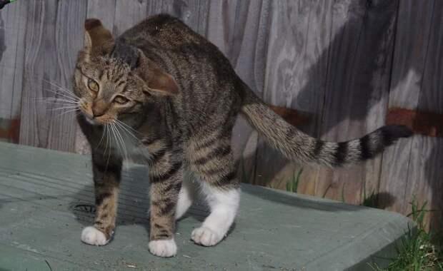 Фотографы застукали кошек под воздействием мяты