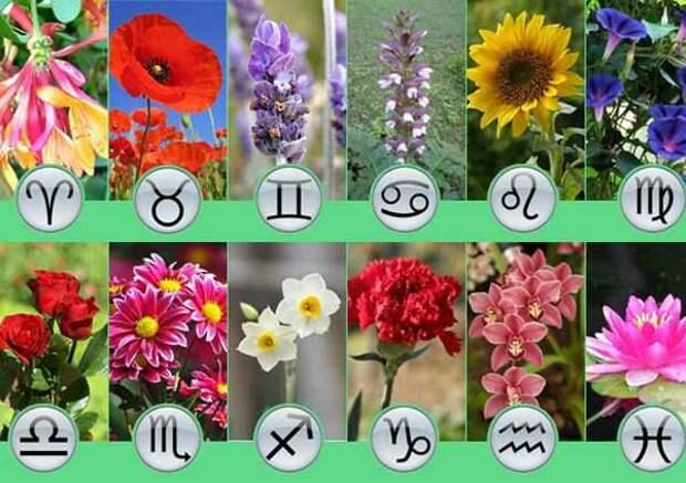 Ваш цветочный талисман по знаку Зодиака