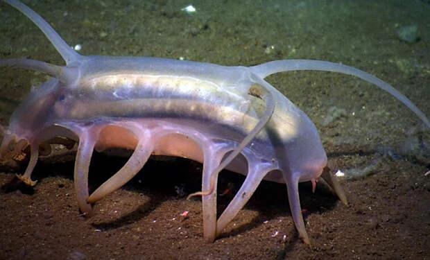 5 самых странных созданий, найденных в Антарктиде научными экспедициями
