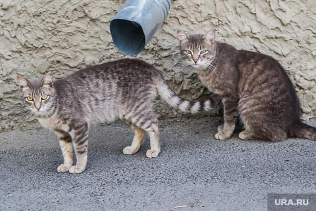 ВМоскве женщина выбросила изокна десять кошек