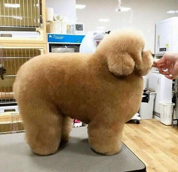 Самый пушистый пес в мире