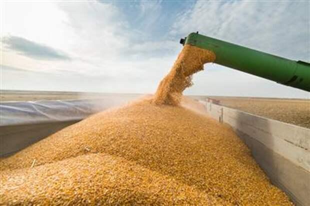 Экспорт пшеницы из РФ