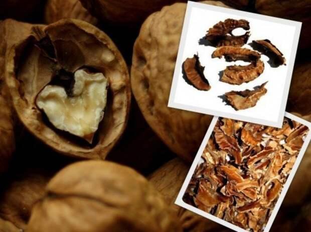 Перестаньте выбрасывать перегородки из грецких орехов! И вот почему.