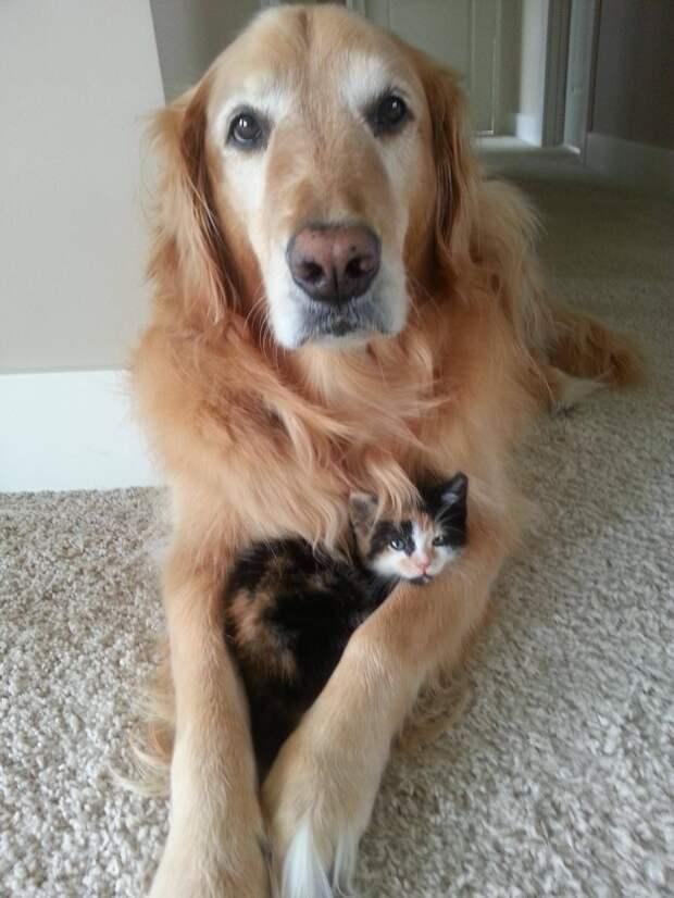 Эти лучшие друзья растопят ваше сердце