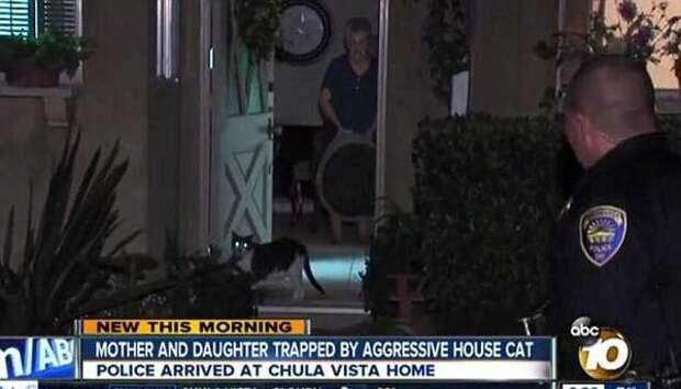 Агрессивный кот взял в заложники двух женщин