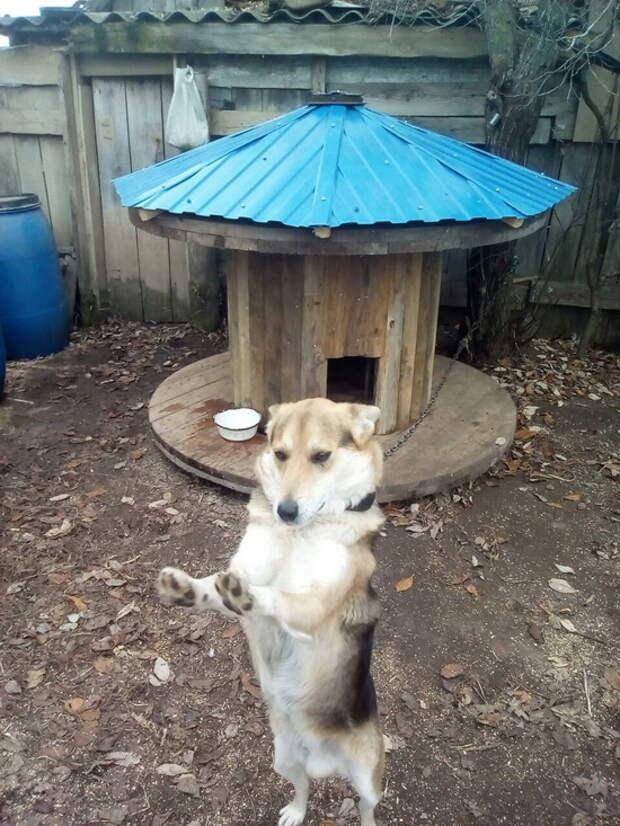Будка для собаки из бухты для кабеля