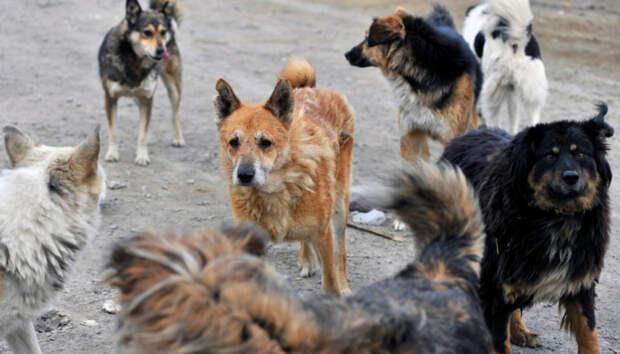В Карелии власти выплатят компенсацию девочке, которую укусила собака