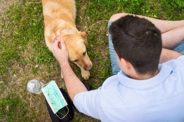 Исследование: собаки могут находить коронавирус улюдей сточностью96%