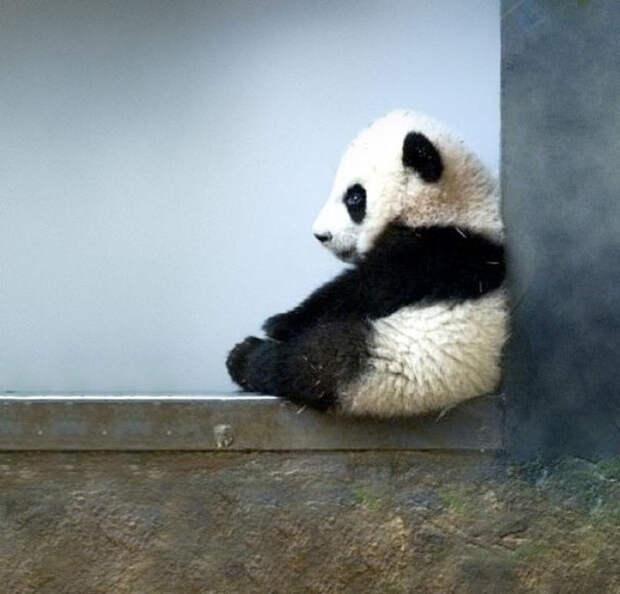 Детеныши животных вфотографиях