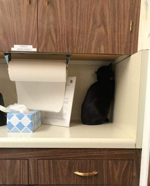Кот необычным образом решил спрятаться от ветеринара ветеринар, домашний питомец, животные, кот, кошки, прятки, умора