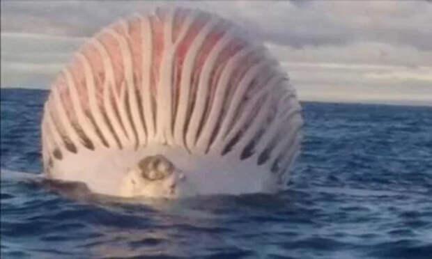 Что происходит после того, как умирает кит: Спойлер - Взрывается!