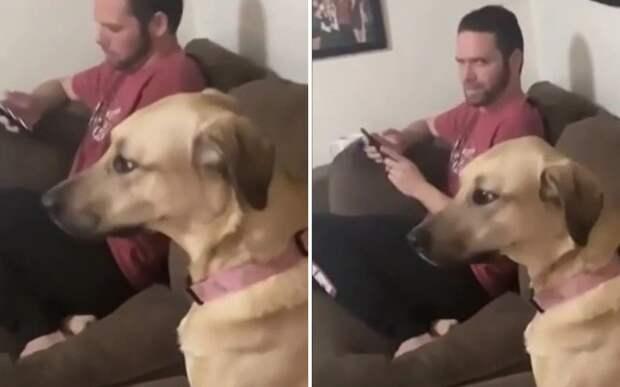 «Что говоришь?»: собака притворилась, что не слышит, чтобы не идти мыться
