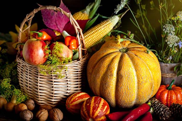 Фестиваль урожая проведут на Дмитровском