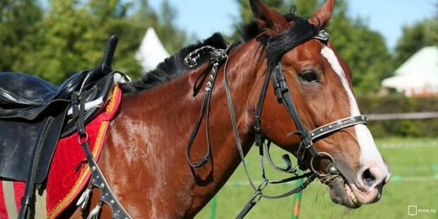 Покататься на лошадях и исполнить бразильский танец можно будет в Саду будущего