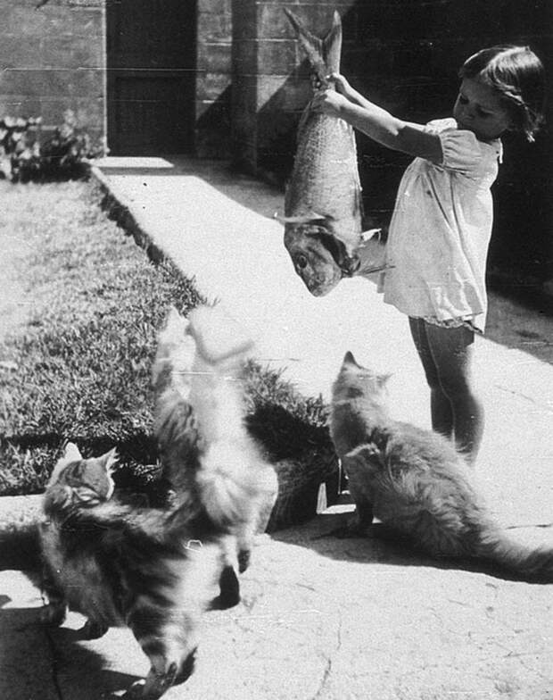 Кис- австралия, животные, животный мир Австралии, забавно, история, необычно, слон за чаем, старые фотографии