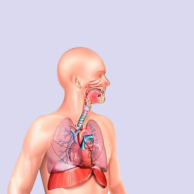 Упражнения, которые улучшат работу дыхательной системы