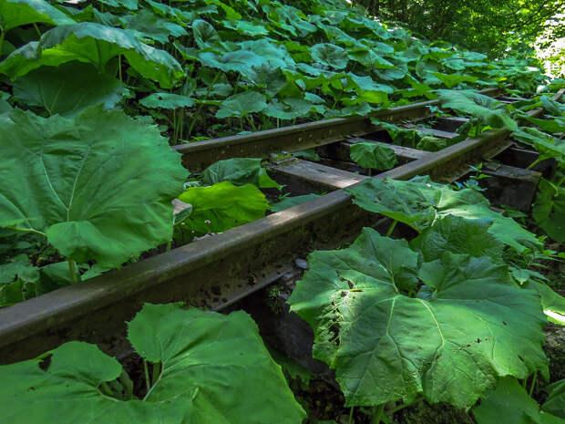 Полуразрушенные пути затянуты лесной растительностью.