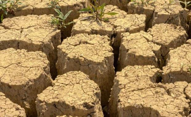 Как растениям удаётся выживать в засуху