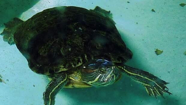 Воронежские власти начали проверку по факту массовой гибели черепах
