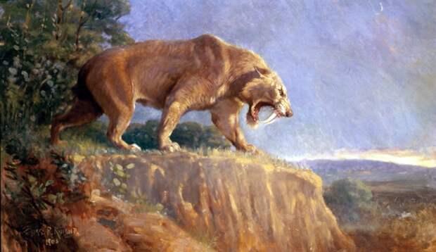 Палеонтологи нашли останки крупнейшей в мире саблезубой кошки