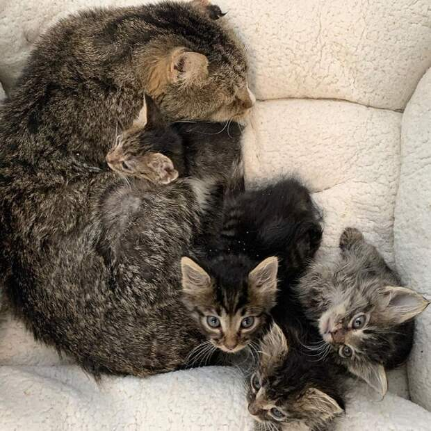 Котята и кот