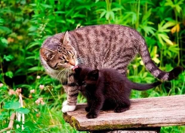 Как кошка пристроила котенка в добрые руки, почти новогодняя сказка